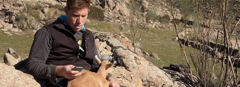 ¿Prevenir ataques de lobos desde el móvil? El proyecto GELOB, liderado por UPA, analizará si es posible